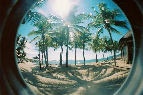 palm trees in paradise on @weheartit.com - http://whrt.it/WAN4SM