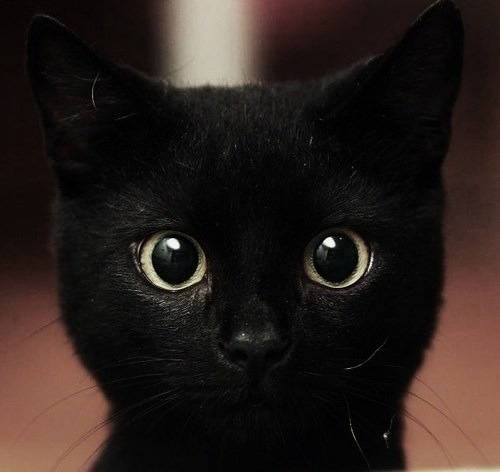 Gatito Mirón :3 on @weheartit.com - http://whrt.it/14TDlI5