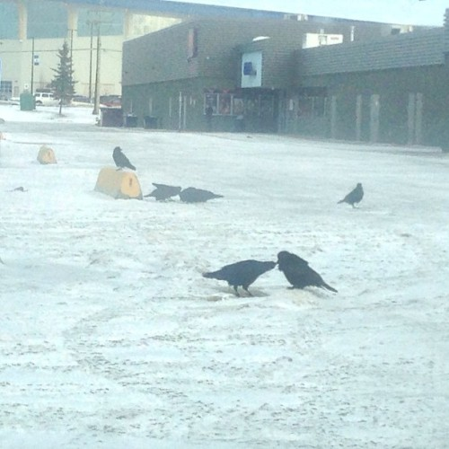 ".@streetcrow, your buddies up here in #YXJ are having serious parties (or should I say, ""conspiracies""), every day at the mall. #TotemMall (2/2)"