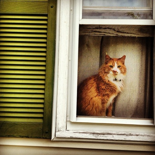 Window cat.