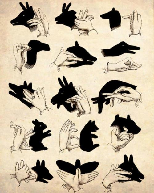 pozible:  Now that the sun is down, give this a try :)  #shadowpuppets