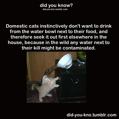 That explains why fuzzbutt drinks out of the sink.  Interesting…