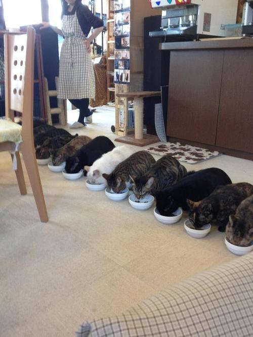 redecorated:  Lunchtime at a Japanese cat cafe  I wish my cats would eat like this… *sigh*