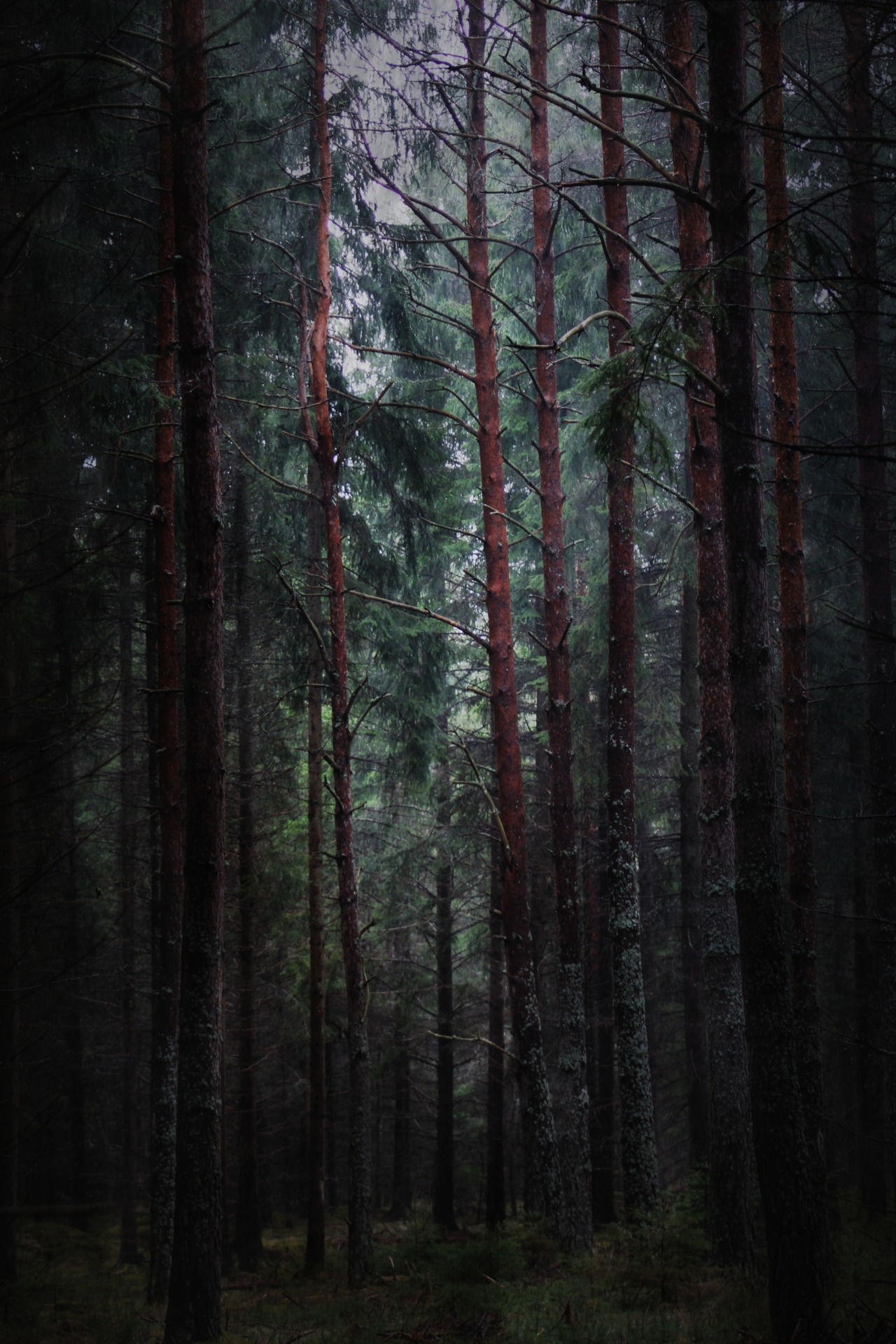 heathenharnow:  Där långa skuggor ruva, Part II XXIII© Heathen Harnow - please do not remove credit
