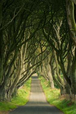 touchdisky:  The Dark Hedges | Ireland by Gerg