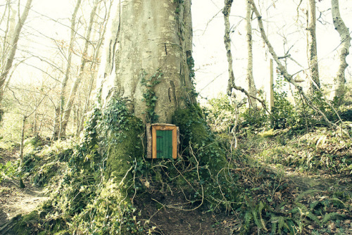 mykindafairytalee:  Fairy Door by Child of Danu on Flickr.