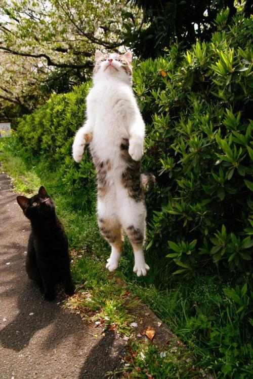 fuckyeahcuteanimalss:  (via 14 Perfectly Timed Cat Photos | Pleated-Jeans.com)