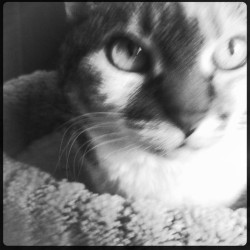 exceptionalgayhousewives:  Noteworthy Cats of Minnesota: Tata Box #Hipstamatic #Jimmy #RockBW11