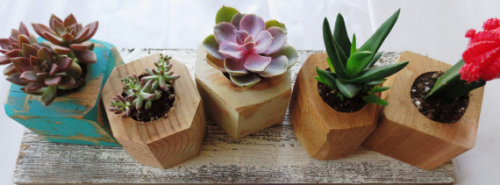 etsygoodies:  (via Faceted Wood Planter Succulent Gem Wall Hanging by thisfinedayhome)