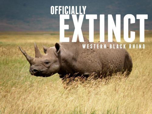 officialmillerhighlife:  everchanginghorizon:  Another species to be added to the ever-growing tick-list:  Africa's Western Black Rhino has been officially declared EXTINCT. Poaching and lack of conservation have led the subspecies of black rhino to extermination, while the Northern White Rhino is 'teetering on the brink of extinction'.   Way to go, humanity.  what's sad is hardly anyone fucking cares or wants to hear about it let alone talk about it