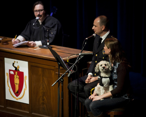 liezlwashere:  SF Sketchfest | Judge John Hodgman | 01.25.13Hodgman presides over a case in which this lady tries to pass off her poodle as a service dog in public areas like the BART, the bus and classrooms. She's training her dog herself. Also, she has no certifications in training her dog as a service dog.