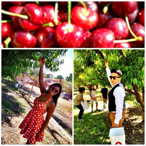 Went #cherry and #nectarine picking with @seansaintgabel 🍒🍑🍒🍑 #fruit #date #love #yummy #spring #arewewhiteyet