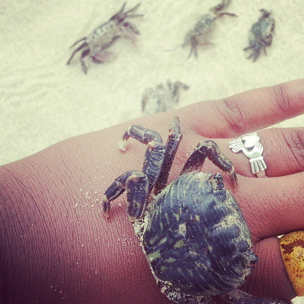 I can't believe these crabs didn't pinch me! #crabs#ocean#sweet#cool#animals#nature