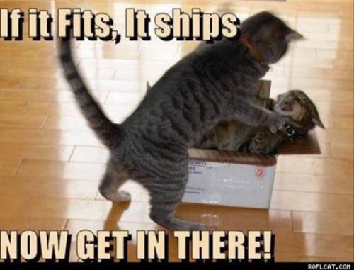 I LOOOOOOVE cats!
