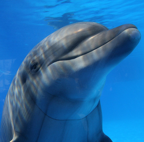 marinemammalblog:  Smiling Dolphin by Eldad Hagar (Please support Hope For Paws) on Flickr.