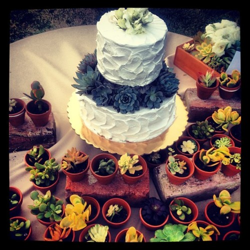 Succulent succulents; Partie/Brown wedding #love #weddingcake #fleecy (at Gaviota )