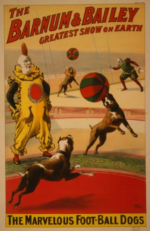 "weirdvintage:  Barnum & Bailey's ""Marvelous Foot-Ball Dogs, 1900 (via Library of Congress)"