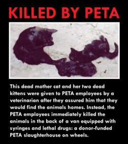 "misery-and-madness:  thisgentlemanbastard:  When PETA representatives have been questioned about the killing they do, they've argued that all of the animals they kill are ""unadoptable."" But this claim is a lie for numerous reasons. It is a lie because rescue groups and individuals have come forward stating that the animals they gave PETA were healthy and adoptable, as detailed in the link below, and PETA insiders have admitted as much, one former intern reporting that he quit in disgust after witnessing perfectly healthy puppies and kittens in the kill room. It is a lie because PETA refuses to provide its criteria for making the determination as to whether or not an animal is ""unadoptable."" It is a lie because according to a state inspector, the PETA facility where the animals are impounded was designed to house animals for no more than 24 hours. It is a lie because Newkirk herself admitted as much during a 2008 television interview: when asked whether or not PETA kills healthy animals, she responded, ""Absolutely."" It is a lie because PETA staff have described the animals they have killed as ""healthy,"" ""adoptable,"" ""adorable"" and ""perfect."" And it is a lie because when asked what sort of effort PETA routinely makes to find adoptive homes for animals in its care, PETA responded that it had ""no comment."" Despite the public perception of PETA as a radical ""animal rights"" organization, in practice, the organization is itself the functional equivalent of a slaughterhouse.  - Nathan WinogradKilled By PETA  This is what you pay for when you donate to PETA. This and sexist, body shaming advertisements that are almost always banned."