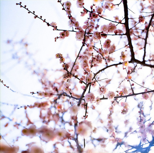 dreams-of-japan:  untitled by yocca on Flickr.