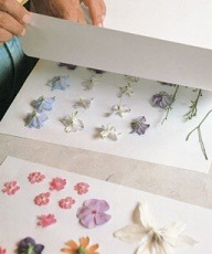 diy pressing flowers