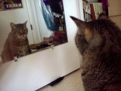 vocaroo:  oieur:  my cat has been sitting in front of the mirror for about an hour now  when will my reflection show who i am inside