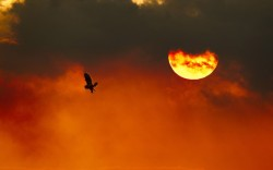 A silhouette of short-eared owl (Asio flammeus) in flight at dusk, Worlaby Carrs, Lincolnshire. This image is part of a new outdoor street-gallery exhibition that has been launched on the South Bank of the River Thames in London, documenting the best of the 2020VISION wildlife project Picture: REX FEATURES