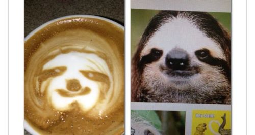 So i have a friend and she is OBSESSED with sloths.She kept asking me to make a coffee and draw one on it so i attempted and this is the outcome what do you guys think?