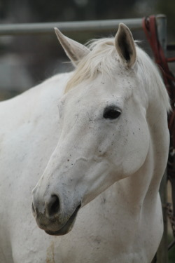 a-bow-of-rain:  lifelongequestrian:  Feather  *life