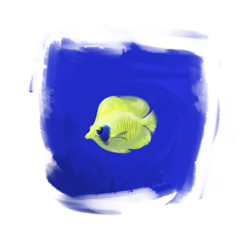 A little fish study :)