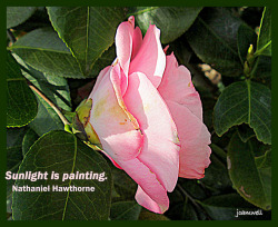 Sunlight Is Painting ~ Nathaniel Hawthorne on Flickr.