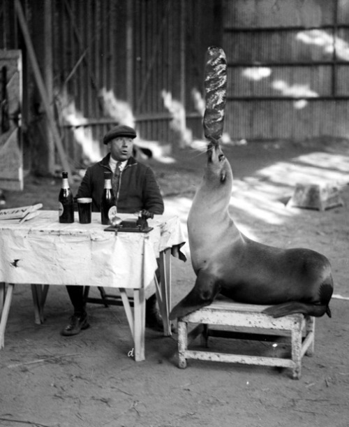 denisebefore:  balanced lunch sanger circus 1932