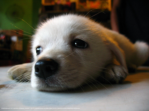 Here's a picture of a cute puppy to make up for that nastiness.