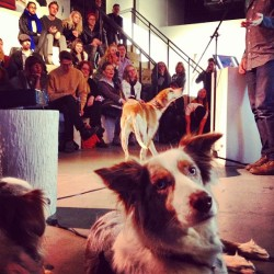 Lola (with Dailo, attending the Maddie on Things book signing with Theron Humphrey): Maddie is my idol and so is Theron! Next to Mama, of course.  (at Powerhouse Arena, 37 Main St DUMBO, Bklyn) www.powerhousearena.com www.maddieonthings.com www.maddieontour.com Lest we forget this day: www.dailola.tumblr.com/post/39522803162