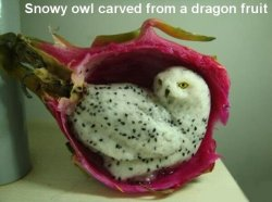 squigglydigg:  I THOUGHT IT WAS AN ACTUAL OWL SITING INSIDE A DRAGON FRUIT SKIN UNTIL I READ THE THING AT THE TOP