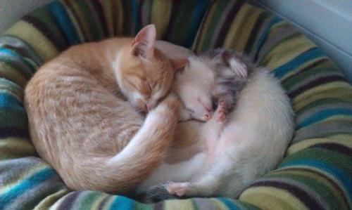 One fuzzy, two fuzzy, one ferret, one kitty!