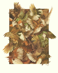 scientificillustration:  Red-throated, Black-capped, Spotted, Barred … by Teagan White more of her amazing work here