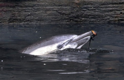 Injured dolphin dies after being stranded in polluted New York City canal  (Photo: Richard Drew / AP) An injured dolphin that became stranded in Brooklyn's Gowanus Canal died Friday, officials said. Read the complete story.