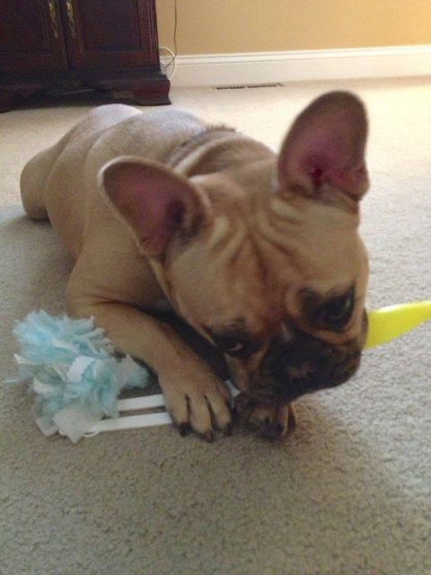 Ahh…the Swiffer is all mine!