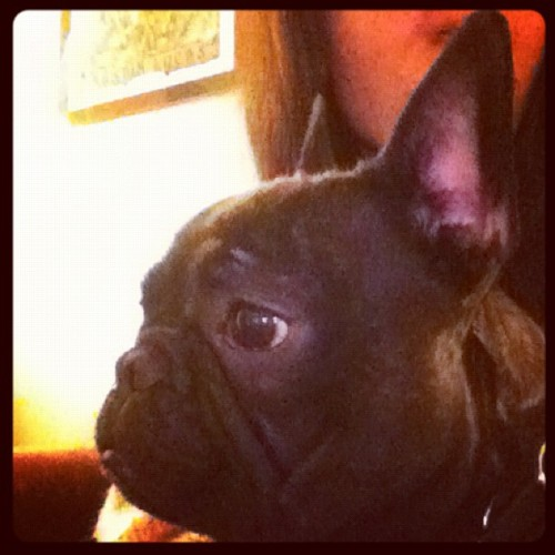 Batman #frenchie #frenchbulldog
