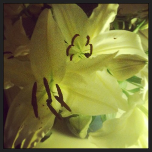 The lilies pete gave me are opening beautifully. #littlethings