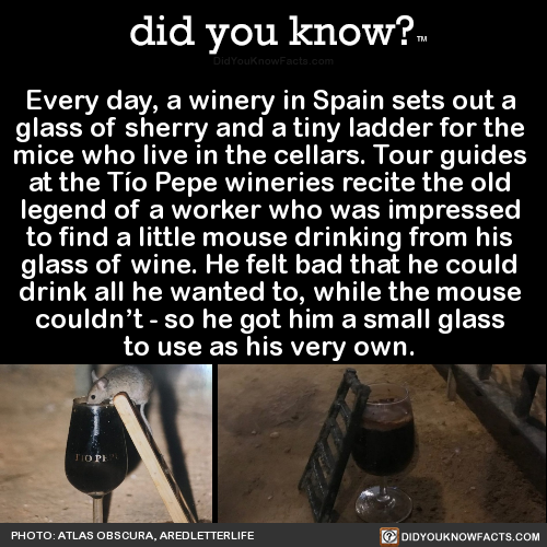 every-day-a-winery-in-spain-sets-out-a-glass-of