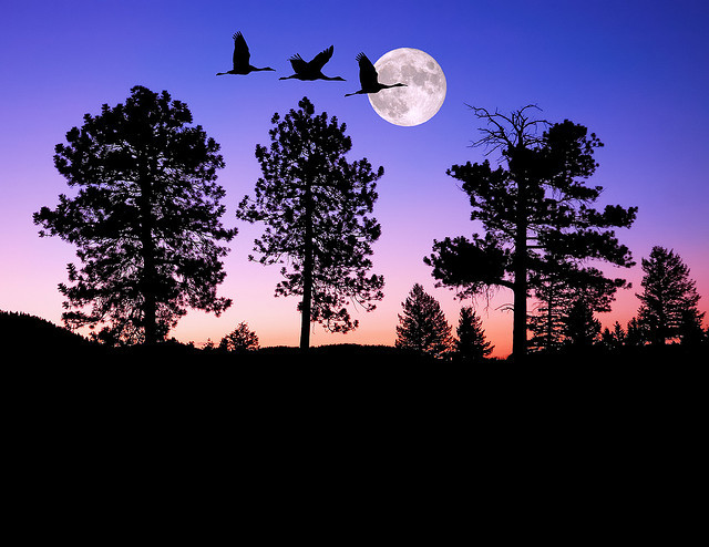 neptunesbounty:  Night of the Cranes by Fort Photo on Flickr.