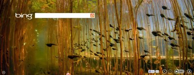 Tadpoles in Cedar Lake, near Campbell River on Vancouver Island, British Columbia, Canada. www.bing.com