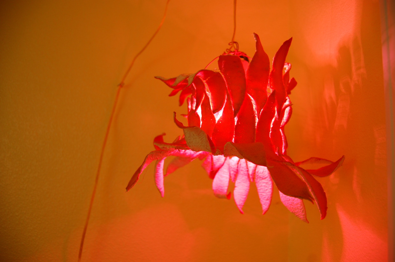Grapefruit Peel Lamp, 2013.