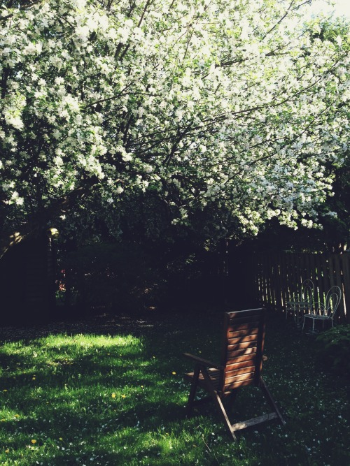 It's Victoria Day here in Canadaland so I sat in that very chair for a while eating some rice and letting the blossom confetti rain down around me. The birds are chirping, the neighbours are chattering and it's just about as pleasant as can be. I really wish it were easier to capture the whole tree at once. The blossoms are soft pink and the tree itself is absolutely massive. The blooms have meant a few new kinds of birds visiting and there are bumblebees dopily poking along. Later tonight there will be fireworks down at Ashbridge's Bay but I think I'll keep reading my book and enjoy the boom boom booming from here. It's been a long time since I've read a book through and for someone who once read voraciously, I have missed it. Right now I long for a little adventure and Nicholas Christopher's A Trip to the Stars is hitting the spot.