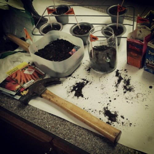 Getting seedlings ready! @bearinachair #spring #garden #seeds