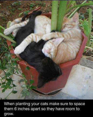 only-cats-photos:  Kitty Plants http://bit.ly/14LNqp8 - Follow me http://bit.ly/Roy1qi