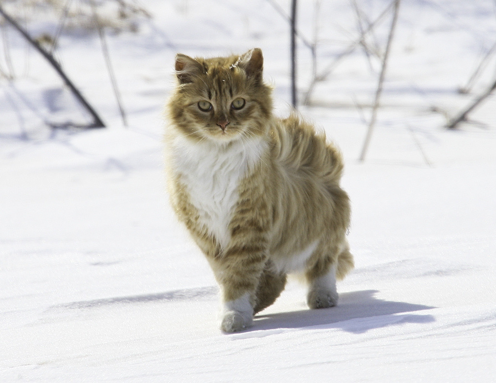 idontcareaboutfinishingcollege:  was feelin bummed but then i saw this cat  thats a really pretty cat
