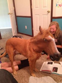 clayinthehandsofourfather:  My roommate thought it was a real horse.