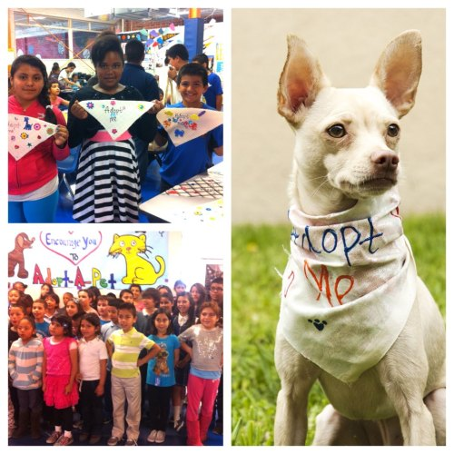 The Boys and Girls Club of Hollywood made these wonderful ADOPT ME bandannas for our shelter pets!